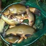 ravofish 025